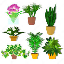 Office Plants Potted Plants Vector A Plant For The Office Flowers A Set Of