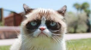 Original Grumpy Cat Meme - grumpy cat sells out to friskies