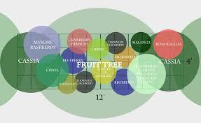 Fruit Tree Garden Layout A Subtropical Fruit Tree Guild The Survival Gardener
