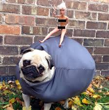 boxer dog vine 18 dog costumes that failed so hard they actually won barkpost