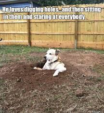 You Re Doing It Wrong Meme - yo dog you re doing it wrong 25 pics meme collection