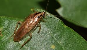 which plants repel roaches 3 plants that really work against roaches