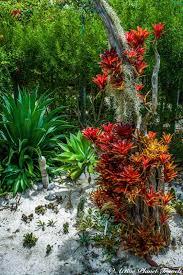 top 45 astonishing photos of the naples botanical garden