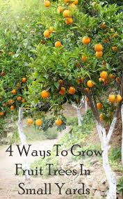 Small Trees For Backyard by Best 25 Small Fruit Trees Ideas On Pinterest Fruit Garden