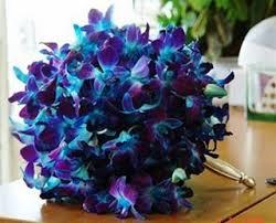 blue dendrobium orchids online wholesale bulk discount cut dendrobium orchid blue dyed