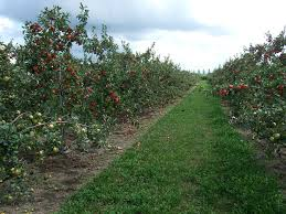 How To Plant A Garden In Your Backyard Growing Apples In Home Garden