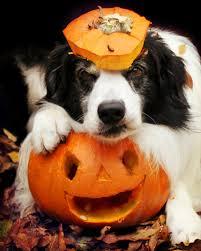 happy birthday halloween kitty pumpkin lynndaviscakes halloween