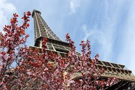 in search of spring in paris at the eiffel tower french moments