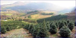 christmas tree farms around asheville nc home design ideas