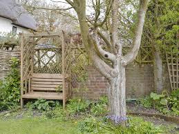 Pin Cushion Tree The Pincushion Ref Ukc372 In Stourpaine Near Blandford Forum
