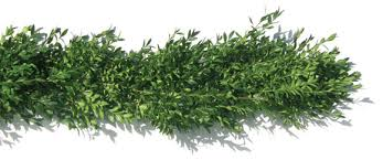 artificial boxwood wreath wholesale christmas tree farms boxwood wreath