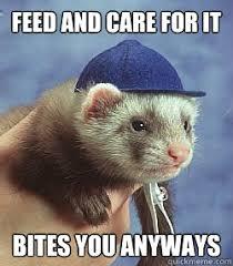 Ferret Meme - pin by isaiah grady on memes pinterest ferret animal and