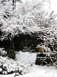 108 best winter garden images on winter garden garden