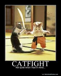 Cat Fight Meme - funny cat pics image cat lovers indie db
