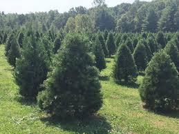 Helms Christmas Tree Farm - penland christmas tree farm home facebook