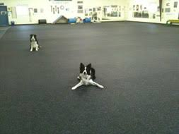 kennel and daycare rubber flooring