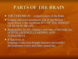 Which Part Of The Brain Consists Of Two Hemispheres Brain And Five Senses