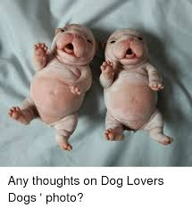 Dog Lover Meme - any thoughts on dog lovers dogs photo meme on sizzle