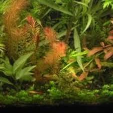 Tropical Aquatic Plants - phoenix tropical fish 40 reviews local fish stores 3148 n