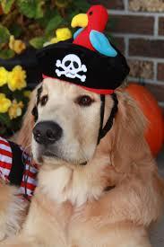 330 best doggie halloween images on pinterest animals puppies