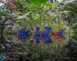Botanical Garden In Bronx by Tropical Reflecting Pool New York Botanical Garden Exploration