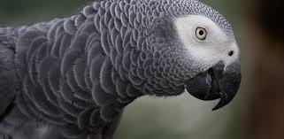 preventing extinctions birdlife
