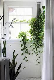 45 stunning plant wall decoration for your bathroom u2014 fres hoom