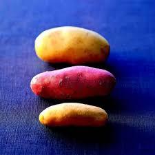 cuisiner la pomme recettes faciles aux pommes de terre