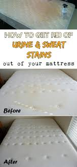 can you steam clean upholstery mattress clean urine from mattress mattress odor mattress genie