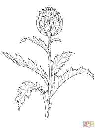 thistle coloring7 com