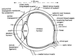 Blind Spot In Eyes Links To Eye Health Sites