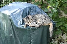 eviter griffes canapé eviter griffe canapé awesome loisirs le topic des chats et des