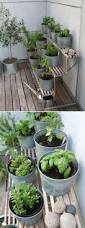 Urban Herb Garden Ideas - how to plant herbs in mason jars the contractor chronicles such