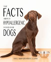 hypoallergenic dog food how does it work and which to buy the