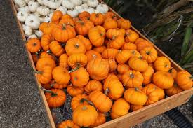 Small Pumpkins Small Pumpkins Or Gourds Stock Photo Image 11159250