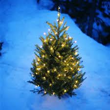 light up tree rockefeller center lights new