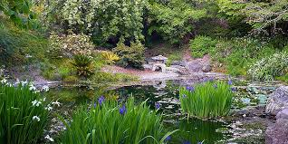 Botanical Gardens Discount Uc Berkeley Botanical Gardens Tickets Save Up To 55