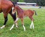All Cute Horse, Pony, Donkey & Minature Horse Foals Invited ...
