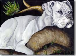 boxer dog white boxers dogbreed gifts com boxer art prints paintings posters