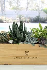 how to make a succulent centerpiece house mix
