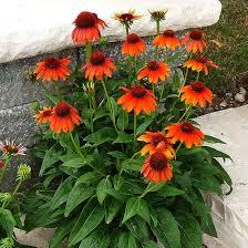 Images Flowers Best 25 Orange Flowers Ideas On Pinterest Flowers Beautiful