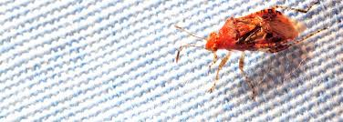 How To Check For Bed Bugs At Hotel How To Spot Bed Bugs In Hotels Bedding Bed Linen