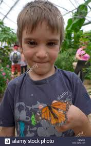5 year boy holding butterfly wye valley butterfly farm and