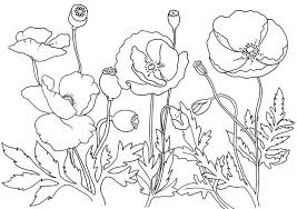 colour number remembrance memorial coloring pages