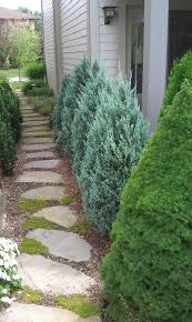 Evergreen Landscaping Ideas Dwarf Evergreens Landscape Traditional With Bolder Landscape Moss