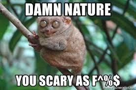 Damn Nature You Scary Meme - damn nature you scary as f terrified tarsir meme generator
