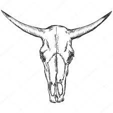 vector sketch illustration old cow skull u2014 stock vector