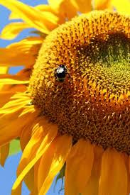 summer solstice 2018 day of summer the farmer s almanac