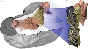 the fluid dynamics of canine olfaction unique nasal airflow