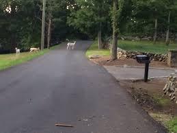 nail salons shut down bobcat white deer spotted missing
